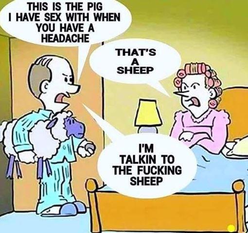 SheepShag.JPG.ad4d246a4d54ba986c71aabdd95e6ffa.JPG